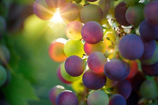 פגמי ייצור יין: הטוב, הרע והמכוער
